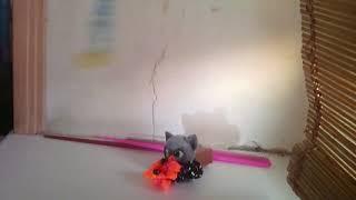 У кота перегорела лампочка!!!! 😰😑😐