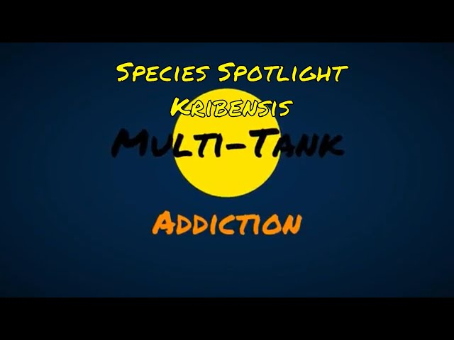 Multi-Tank Addiction - YouTube