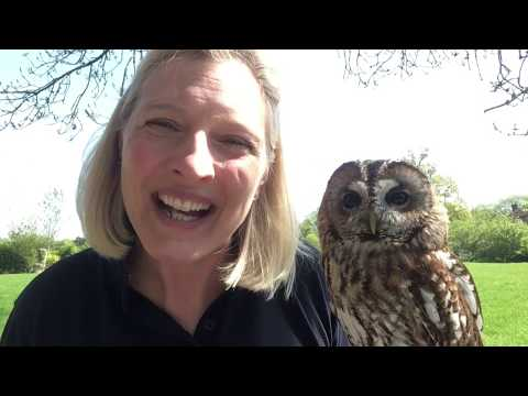 Tawny Owls At Feathers And Fur Falconry Centre