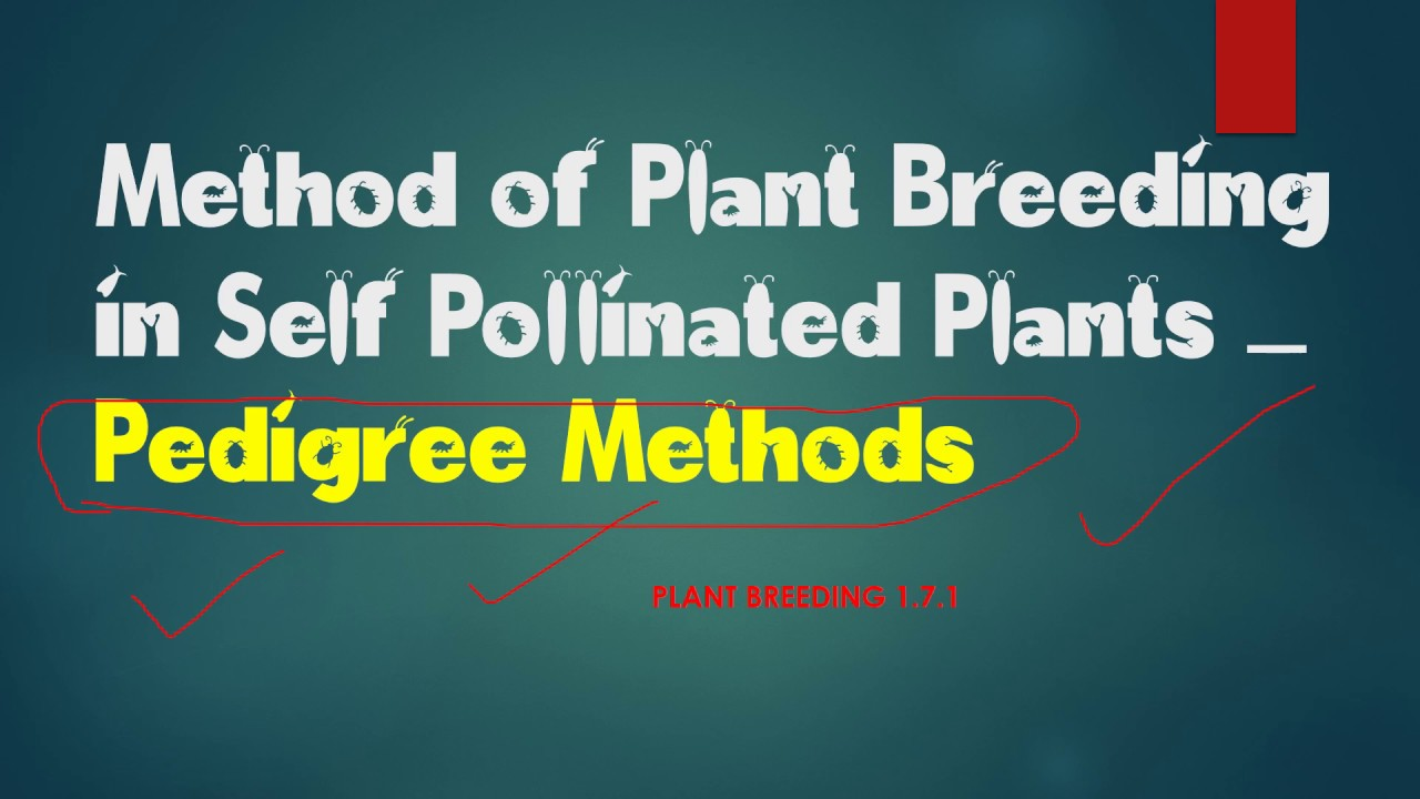 methods of plant breeding New plant breeding methods in 2050, nearly ten billion people will populate our  planet – almost twice as many as in 1990 feeding the growing world.
