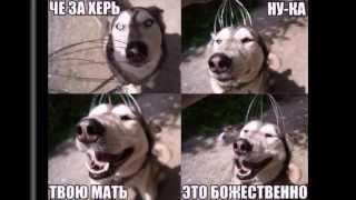 Прикольные собаки Фото