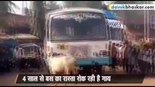 Dainik bhaskar report of karnal