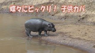 2012年7月アフリカのケニアにサファリで行きました。マサイマラ動物保護...