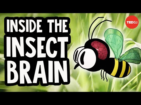 Video image: Why the insect brain is so incredible - Anna Stöckl