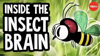 Why The Insect Brain Is So Incredible - Anna Stockl