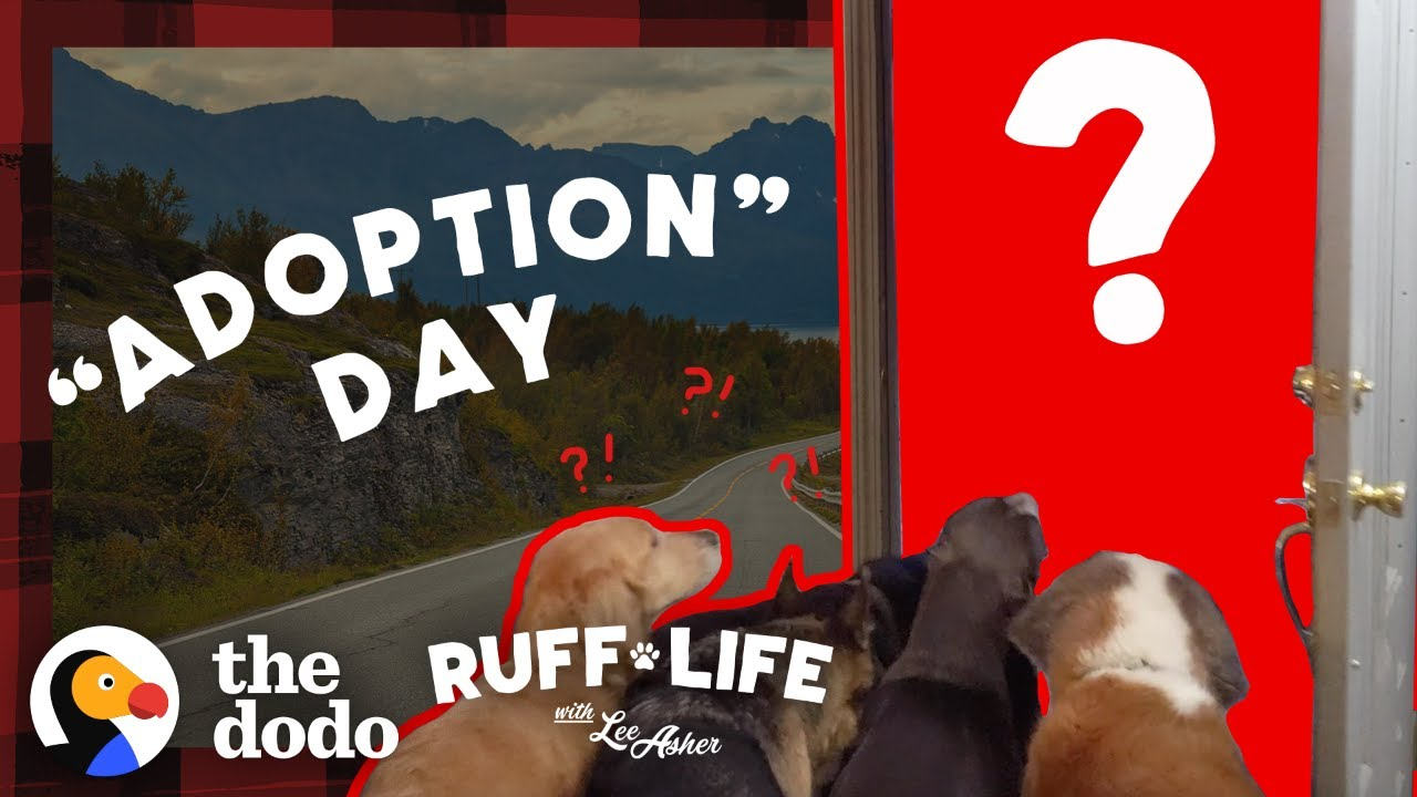 Guy With 9 Dogs Is So Tempted To Adopt 2 More | Ruff Life With Lee Asher
