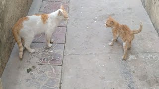 Feral Cat Turning Into Friendly Domestic Cat || Kittens Are Risking Their Life To Drink Milk