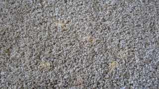 Carpet  Bleach Stain DIY Repair