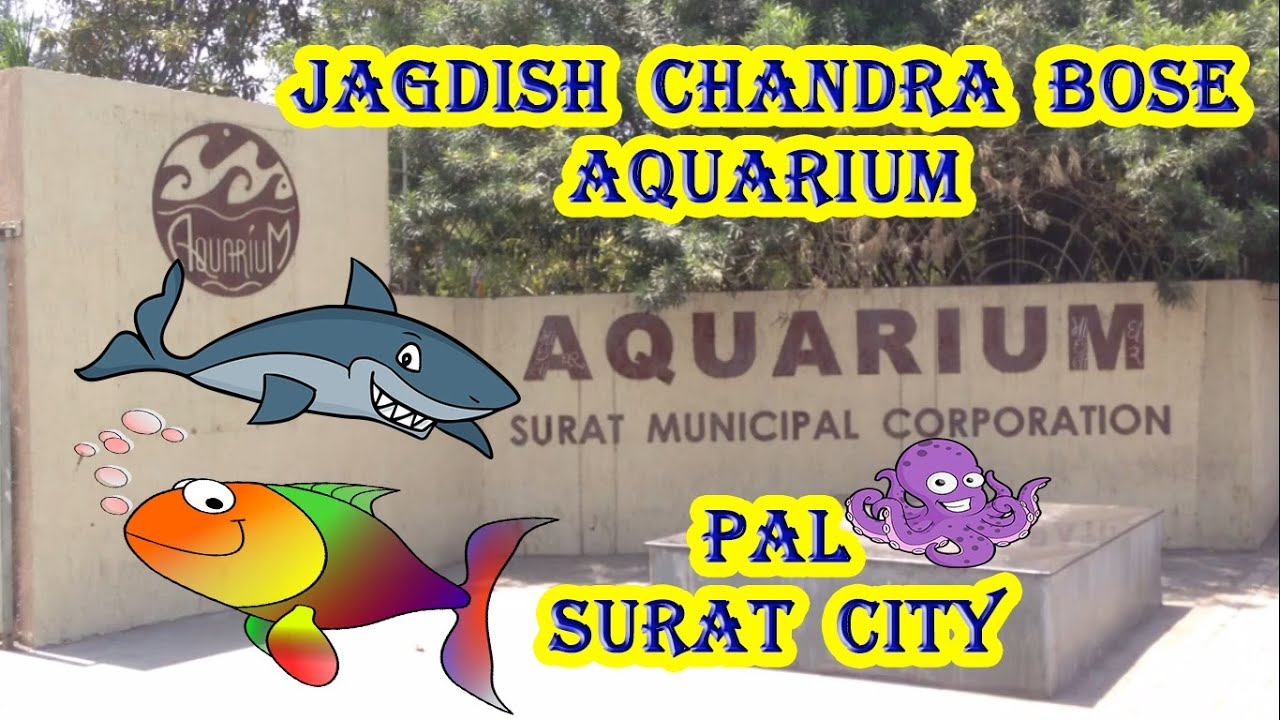 Fish aquarium in vadodara - Jagdish Chandra Bose Aquarium Surat City Gujarat