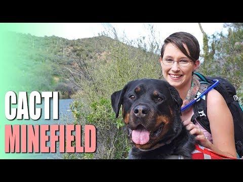 Cacti Minefield! - Butcher Jones Trail in the Tonto National Forest, Arizona
