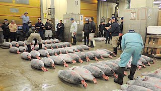 Tsukiji Fish Market Bluefin Tuna Auction Tokyo Japan