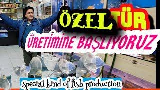PETSHOPTAKİ ÖZEL BALIKLARI TOPLADIM, lepistes akvaryumu, melek balığı, akvaryumdaki balık