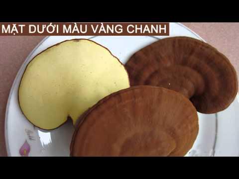 Linh chi tươi tại Hà Nội
