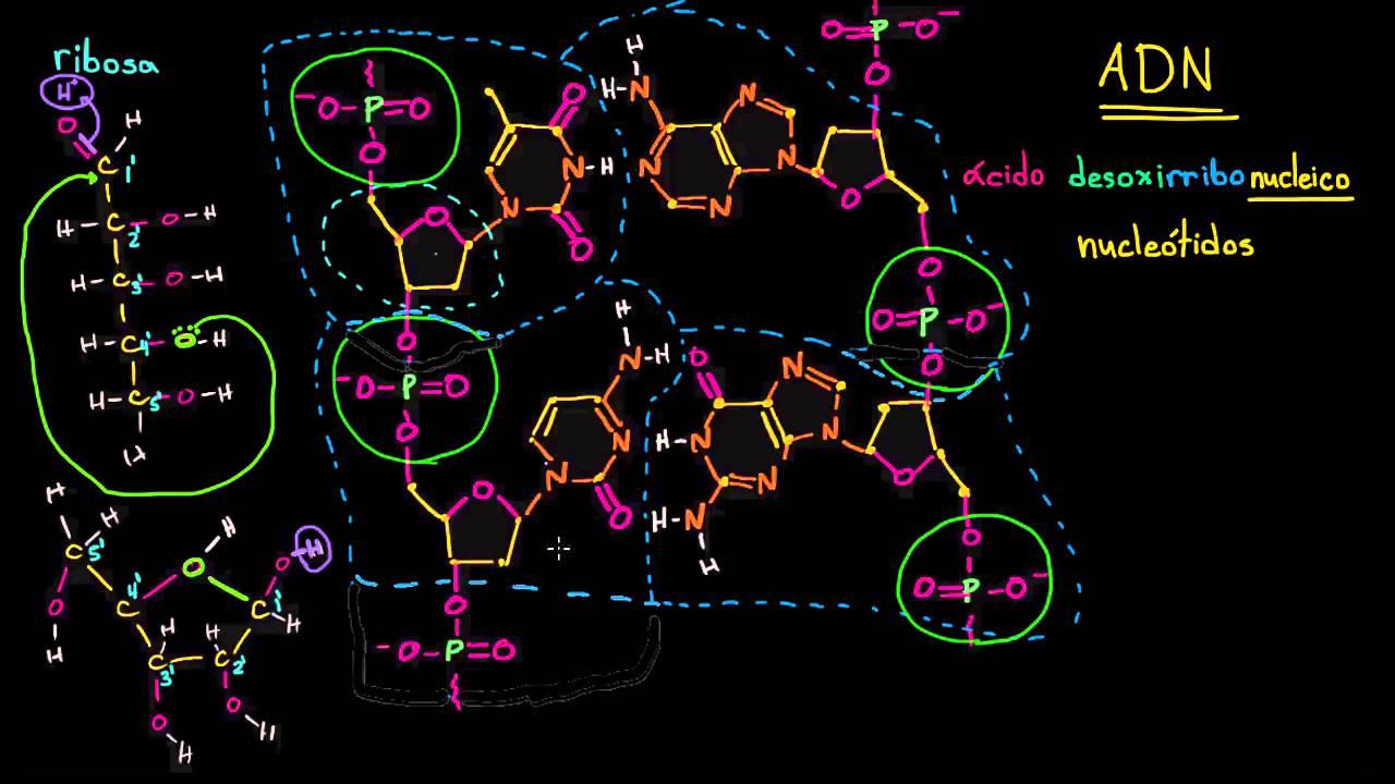 Estructura molecular del ADN | Macromoléculas | Biología | Khan ...