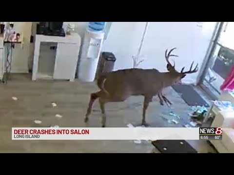 Eddie & Rocky - That One Time a Deer Crashed Through Hair Salon's Window