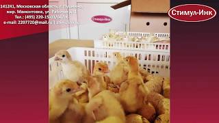 # инкубатор #Стимул_Инк #инкубация # фермерский_инкубатор # яйцо # курица #  Инкубатор Стимул-4000М