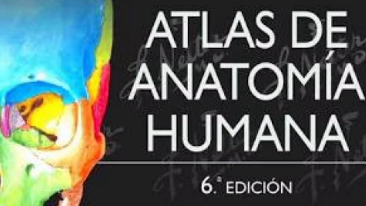 Atlas de anatomía humana de Netter descargar gratis - YouTube