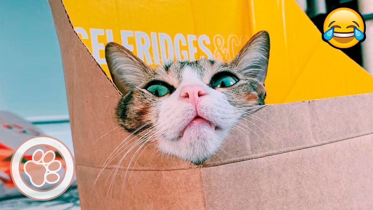 Cats and Box – Funny cat videos compilation (April 2019)