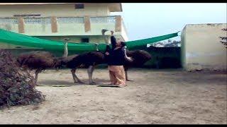 Zafran Jahangir in Ostrich Farm زعفران جہانگیر