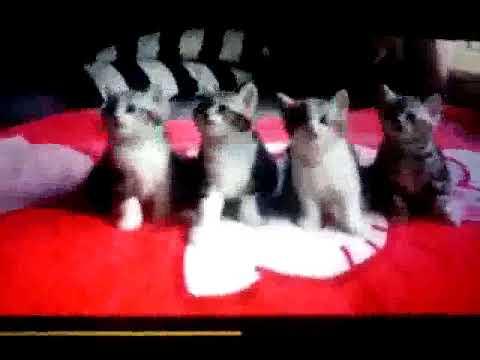 Super cute dancing cats