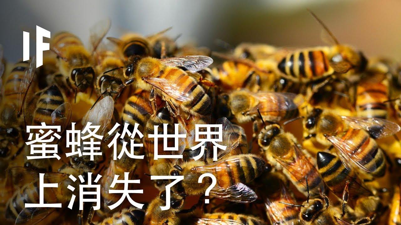 如果蜜蜂從世界上消失了? | 大膽科學 - YouTube