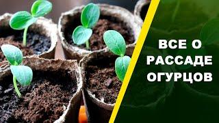 РАССАДА ОГУРЦОВ: выбор семян, посев, уход! СОВЕТЫ ЮРИЯ БУШУЕВА  | Природа будущего