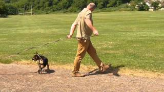 Long Lead Training Technique For Dogs And Their Owners