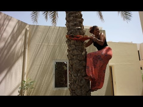 Vlog #30 How to climb a date tree in Dubai, UAE