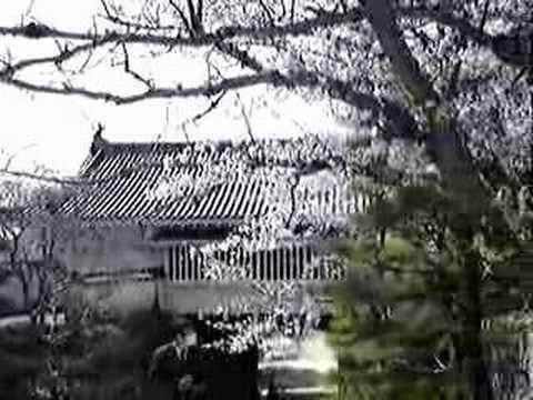 岡山城下的櫻花雨