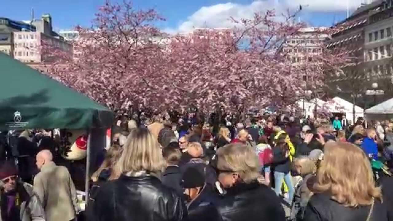 fest tjeck dildo i Stockholm