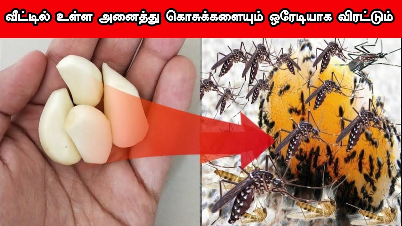 1 தடவை இவ்வாறு செய்தால் வீட்டில் உள்ள கொசுக்களை மொத்தமாக விரட்டி அடிக்கும் | Mosquitoes Remedy Tamil