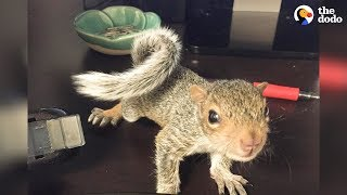 Rescued Baby Squirrel Is Queen Of Her New Home | The Dodo