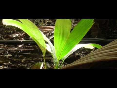 Discover Vallée de Mai  on Praslin Island