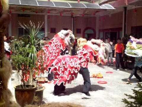 Stupid funny lion dance