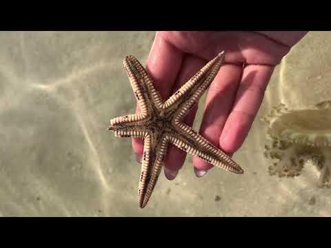 Рыбалка  и путешествие в Эмиратах.Ночной Дубай и отель Atlantis. Часть-3.