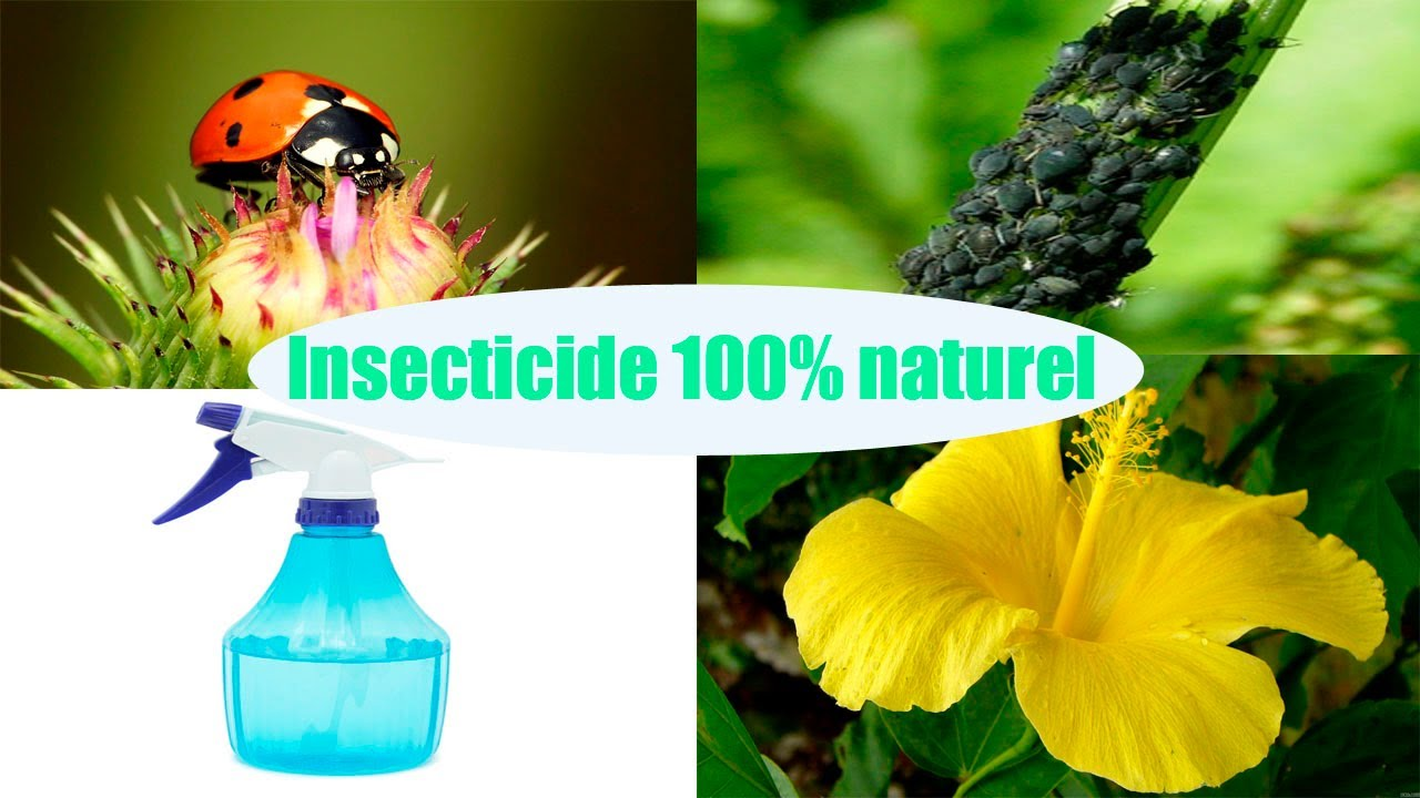 diy insecticide 100 naturel pour les plantes youtube. Black Bedroom Furniture Sets. Home Design Ideas