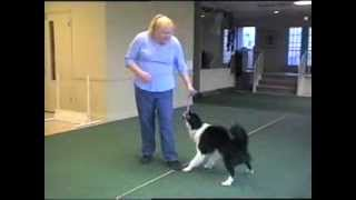 Tug-o-war And Avoiding Behavior Problems In Dogs