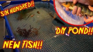 buying-eric-a-new-fish-for-his-diy-pond-600-gallons