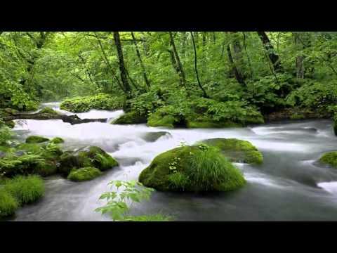 Звуки живой природы! Красивые обои!