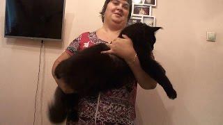 Vikont Largowinch. кот, 1 год 1 месяц / видео на конкурс кастратов