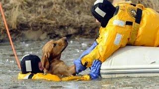 Heroes en la vida real - Rescate de animales