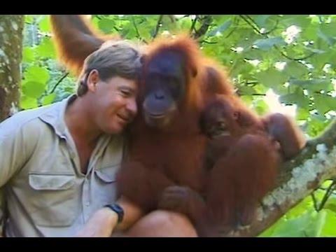 Crocodile Hunter Steve Irwin Has Emotional Encounter With Mother Orangutan.