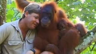 Crocodile Hunter Steve Irwin Has Emotional Encounter With Mother Orangutan.