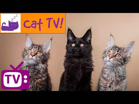 2 Hour Cat TV Playlist! Bird and Fish Videos for Your Cat to Watch Combined With Relaxation Music