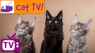 2 Hour Cat TV Playlist! Bird and Fish Videos for Your Cat to Watch Combined With Relaxation Music thumbnail