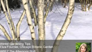 Eliza Fournier on Winter Gardening Tips