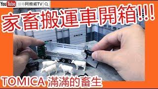 2019 TOMICA長車 9月新車 No.139 家畜運搬車 | 開箱介紹 【解析玩具】[阿娘威TV]