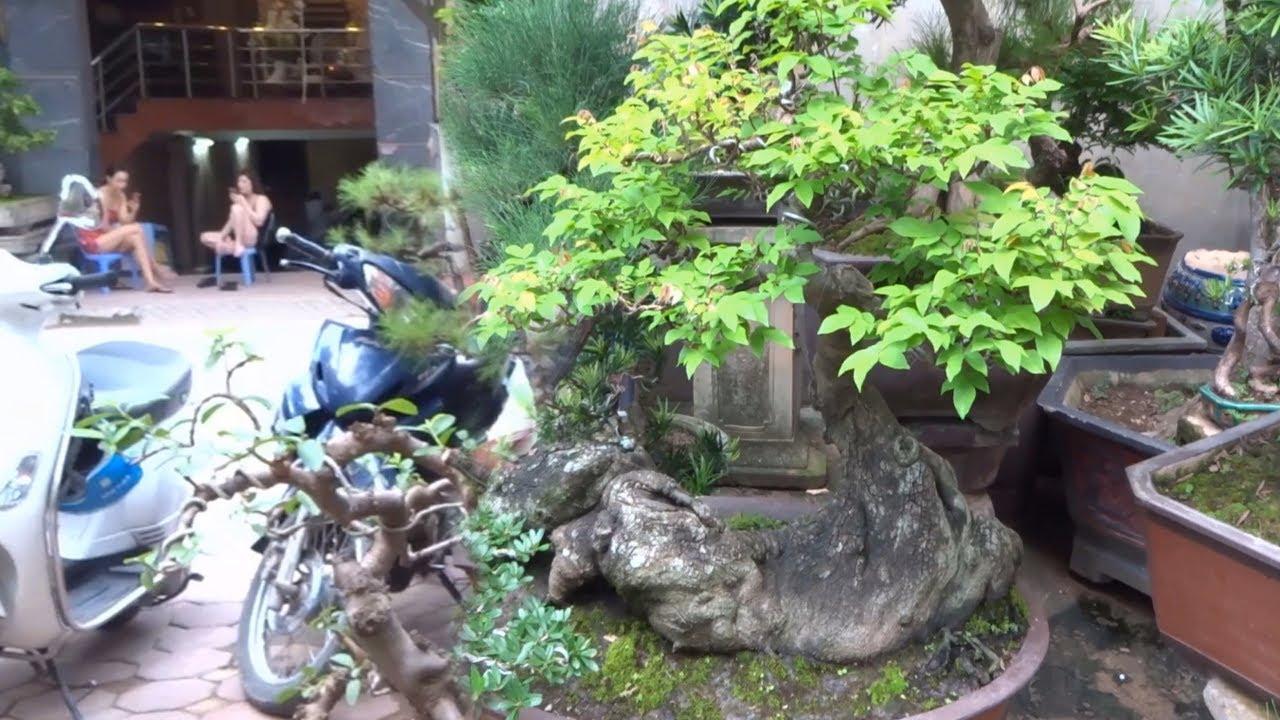 Vườn cây cảnh đẹp từ ngoài cổng đến trong vườn - Wonderful collection of bonsai