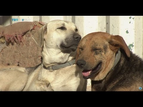 Money Talks: Feeding Istanbul's street dogs