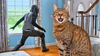 cat-tested-to-see-whether-he-d-defend-home-during-home-invasion